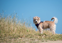 Baxter, walk at the marina, April 29, 2015