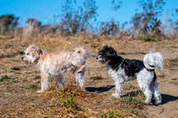 Baxter and Pippa 17-Nov-17, marina d500 70-200