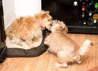 Baxter and JaJa playing, Dec. 16, 2014