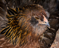 chicks, August 3, 2014 (3 of 26)