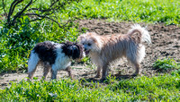 Baxter and Pippa 11-Feb-17 marina d500 70-200
